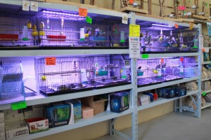 Pet and Aquarium requires many different types of shopfitting to merchandise their unique products, and Bethel Shopfitting World has a fully range to help with pet retailers. Special thanks to Pet & Aquarium Centre for letting us showcases the lovely photos here. The shelving and shopfitting...
